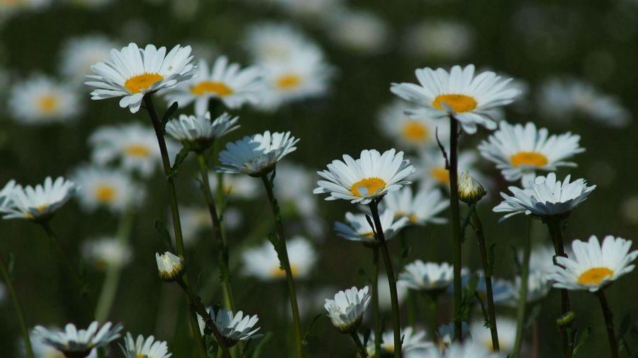 少女マンガ Flowers EyeEm Flower CanonFD  Streamzoo #oldlens