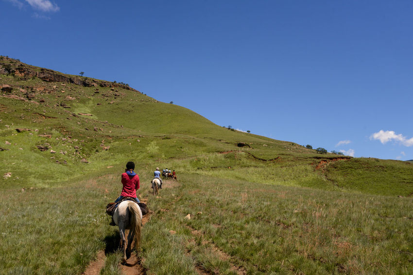 Khotso Lesotho Expedition - Horse riding trip through the Bushmans Nek mountain pass and into the heart of the Sehlabathebe National Park in the Southern Drakensberg. Bushmans Nek Expedition Grass Hills Khotso Lesotho National Park Scenic Route Sehlabathebe Southern Drakensberg Adventure Africa Drakensberg Horse Horse Riding Horseback Riding Scenics