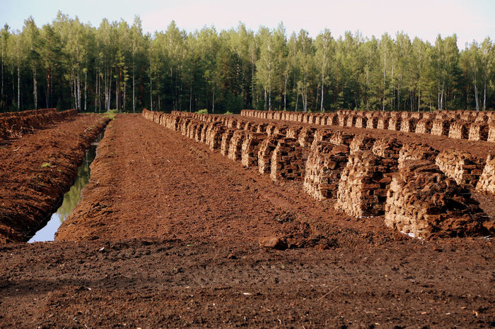 peat is stacked in rows waiting for transport in a forest in Latvia. Torffabrik Travelling The Baltic States Brennstoff Lettland  Travelling Bog Peat Torfabbau Peat Extraction Peat Field Renewable Energy Peat Peat Mining Harvesting Peat Lagerung Agriculture Peat Bog Heating Period Fossil Fuels Evening Light Torfballen Fossil Fuel Swamp Torffeld Wald Und Torf Latvia