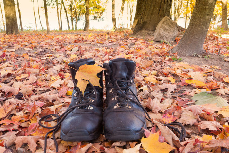 Leather hiking boots in yellow orange fall colored autumn forest ready to go on a hike Fall Autumn Autumn colors Hiking Hiking Boots Leather Boots Forest Leaves Leaves On The Ground Leave Litter Boots Leaf Shoe Shoes Leather Shoes Tree Nature Outdoors One Person Boot Leather Black Color Hardwood Forest Deciduous Forest Hike The Traveler - 2019 EyeEm Awards