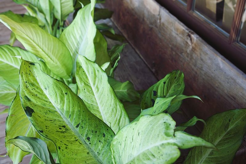 Green Color Leaf Plant Part Food And Drink Food Freshness Close-up Healthy Eating No People Nature Indoors  Wellbeing Plant Vegetable Day High Angle View Herb Focus On Foreground Home Interior Still Life