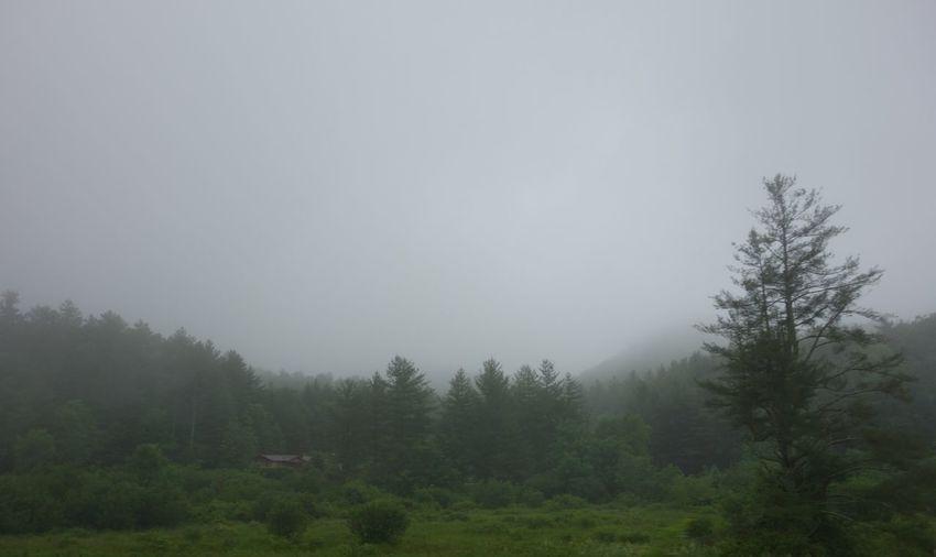 Gray Sky and