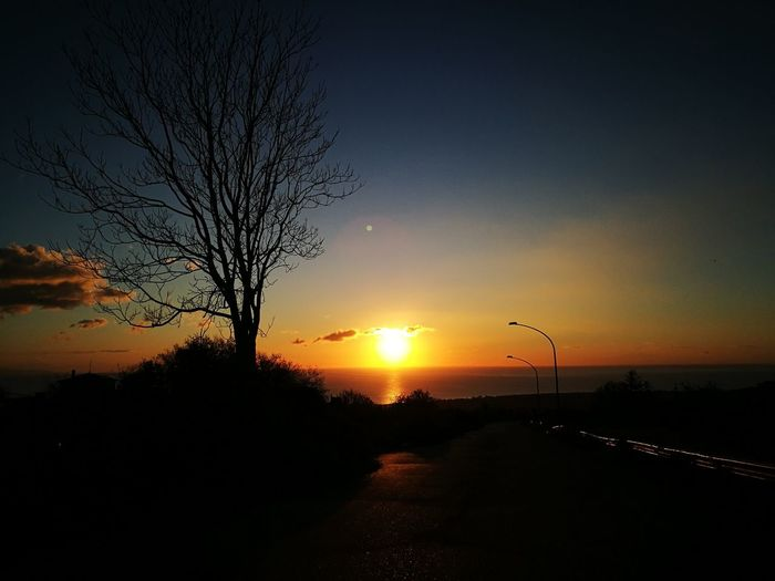 Sun Morning Morning Light Bird Tree Sky Sea No People Horizon Over Water Outdoors Day Water