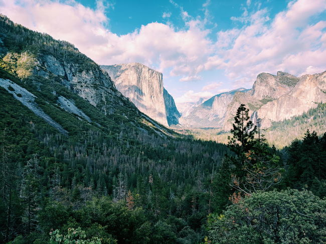 California Yosemite National Park Beauty In Nature Landscape Mountain Mountain Peak Mountain Range Scenics - Nature Tree