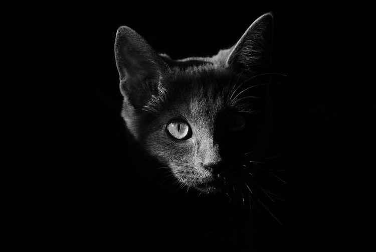 Cat Catlover Greycats