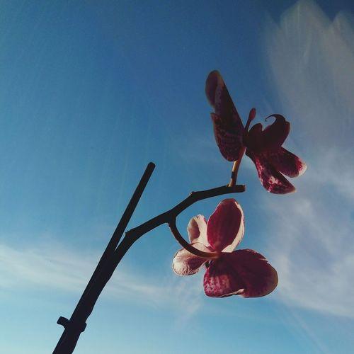 Gmorning🌞 утродоброе утроначинаетсянескофе утро красиво орхидея красота💕🌸🌹 цветок  небо облака First Eyeem Photo