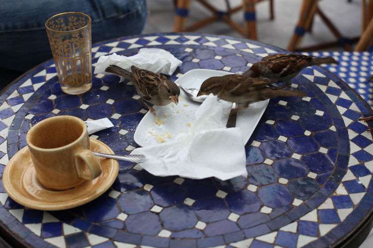 Close-up of two sparrows eating left over food on table