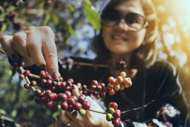 woman harvesting arabica coffee seed Coffee Seed Arabica Harvest Harvesting Agriculture Agricultural Woman Women Face Cafeine Organic Cultivated Nature Natural Smile Fresh Plant Tree Branch Raw Food Raw Red Plantation Tropical