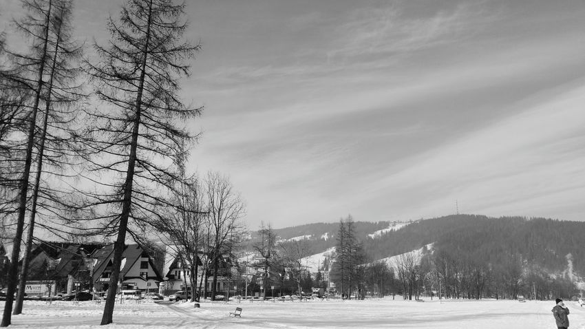 Zakopane, Poland ❄ It's So Cold . Tree Winter Snow Day Nature Winter Holidays Deep Snow Sky Beauty In Nature