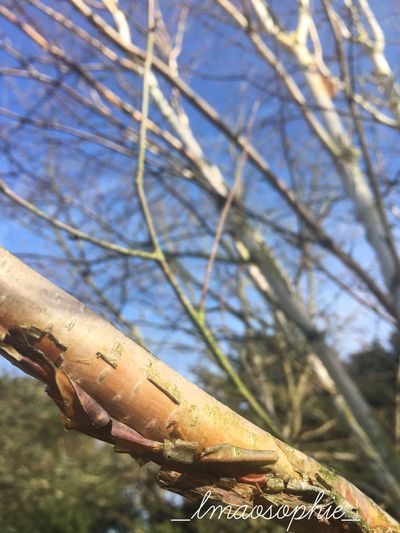 Hello! Follow my instagram _lmaosophie_ for more of my shit! Sky Outdoors Close-up Day No People Nature Tree Eyeemphotography EyeEm EyeEm Gallery Silver Birch Tree Trees EyeEm Nature Lover Eye4photography  Selective Focus Focus On Foreground