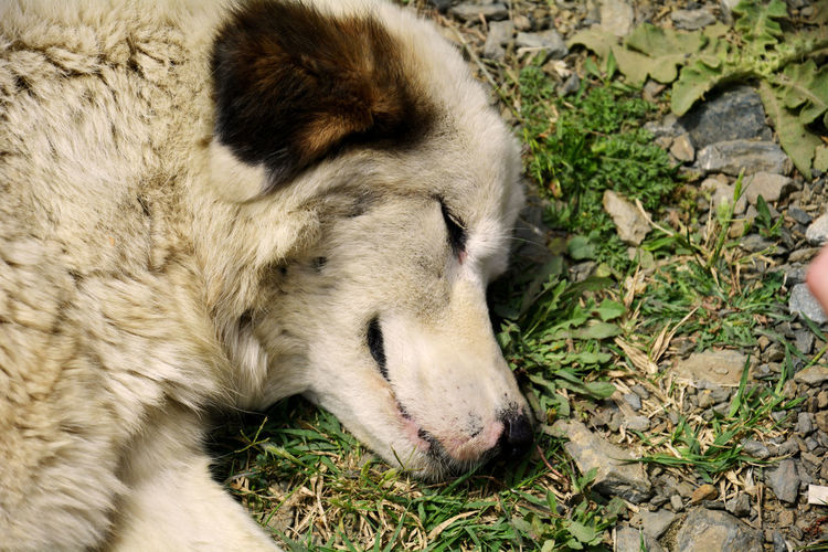Happy dog Dog Relaxation Eyes Closed  Close-up Sleeping Pets Siberian Husky Moments Of Happiness