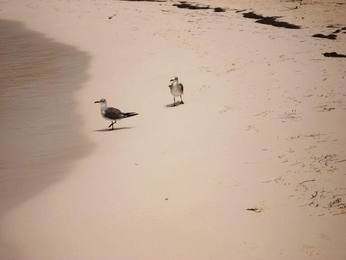 Un Paseo Por La Playa 💏 Live For The Story Pet Portraits