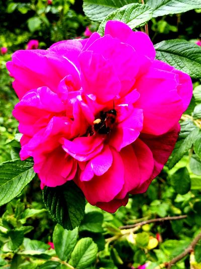 Petal Flower Nature Beauty In Nature Insect Plant One Animal Fragility No People Day Animal Themes Animal Wildlife Bee Flower Head Pink Color