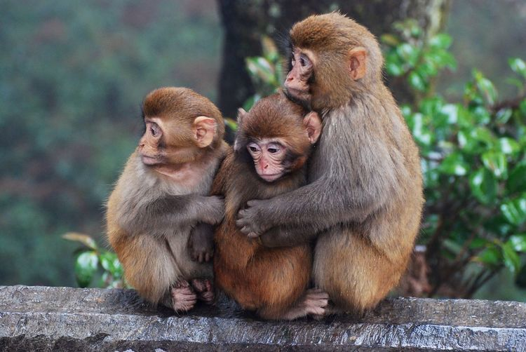 Monkeys monkey family Trees Nature No People Outdoors Travel Destinations Beauty In Nature