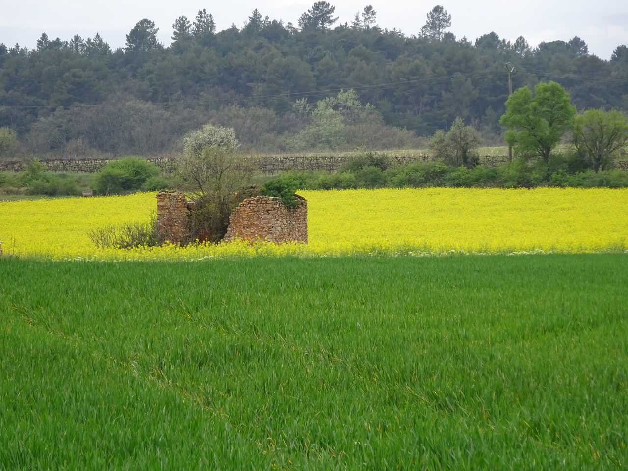 field, agriculture, nature, tree, green color, growth, day, tranquility, no people, landscape, tranquil scene, grass, beauty in nature, rural scene, outdoors, built structure, yellow, architecture, scenics, sky