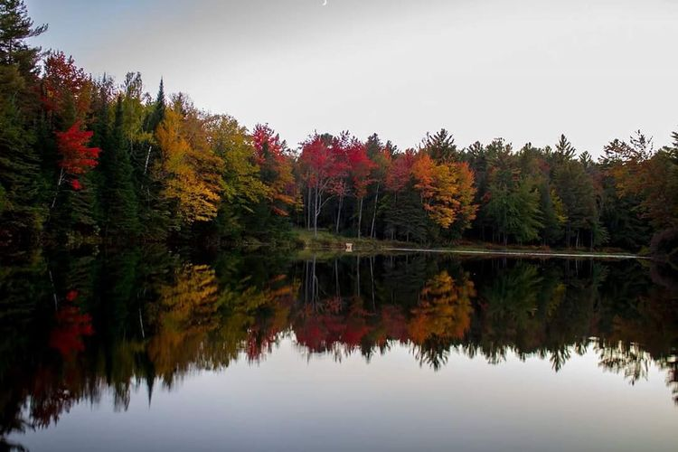 Reflection of trees in calm lake against clear sky