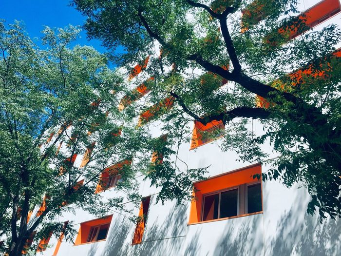Tree Architecture Building Exterior Built Structure Plant Building Low Angle View No People Orange Color Growth House Sky Day Outdoors Residential District Window Red The Architect - 2019 EyeEm Awards