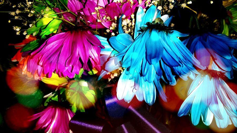 Flowers Wilted Valentines Pretty Spring Flowers Colorful Bokeh Flowerfairies