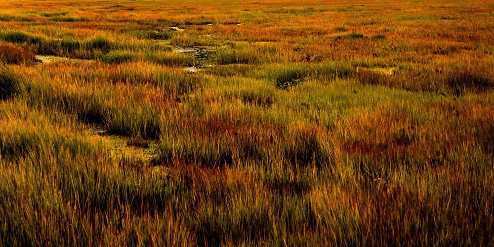 Grass Plant Landscape Land Field Environment Beauty In Nature No People Nature Green Color Growth Scenics - Nature Agriculture Rural Scene Non-urban Scene Tranquility Full Frame Outdoors Animal Day