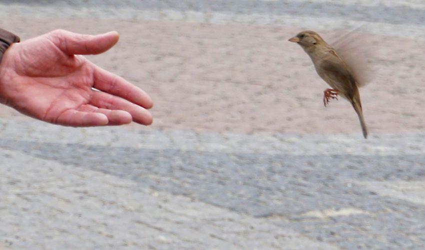 trust Sparrow