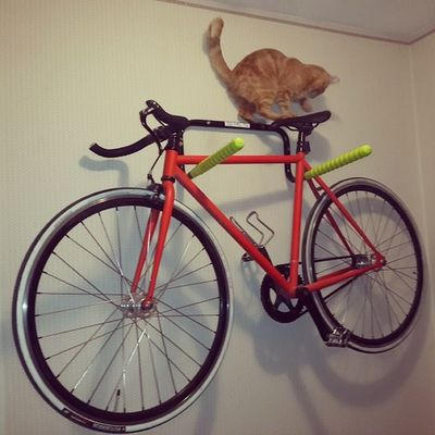 Вот такие пироги  котеофедорелли Fixedgear Catslife Cat