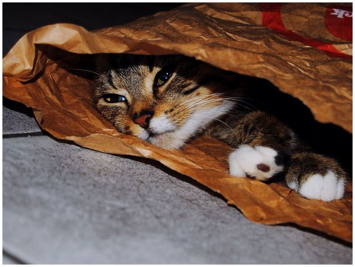 Taking Photos Belgium Cat And Bag Catslife Cute Cats Hello World EyeEm Gallery Eyeemphotography Relaxing Cat♡