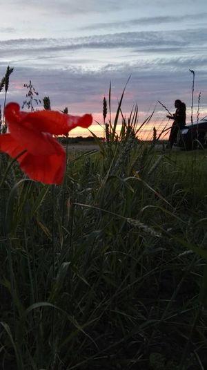 Groningen Klaproos Groen Noordpolderzijl Auto Sunset