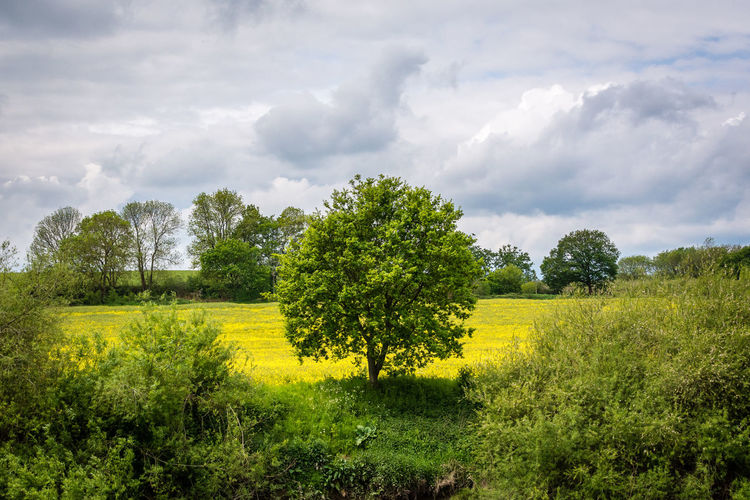 Plant Grass Green Color Cloud - Sky Sky Tree Nature Growth Beauty In Nature Scenics - Nature Tranquil Scene Tranquility Outdoors Countryside River Tree Green Cloud Cover Plant Growth Flower Weeds Bright Field Land Landscape Environment No People Day Yellow Non-urban Scene