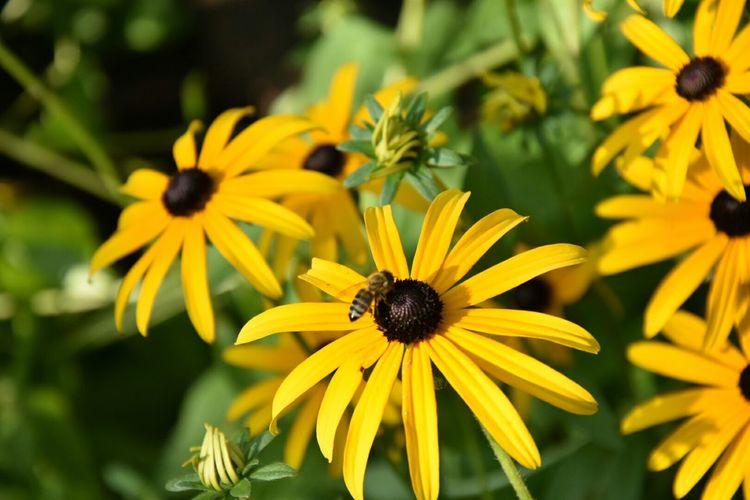 Beautiful Nature Flower Wanderlust Beautiful Day EyeEm Nature Lover Yellow Flower Summer Maja Flowers,Plants & Garden