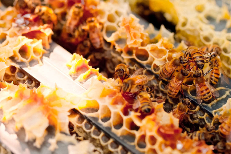 bees in action Nature Nature Photography Beauty In Nature Bee Close-up Food High Angle View Honey Honey Bee Nature_collection No People Outdoors Sweet Wildlife