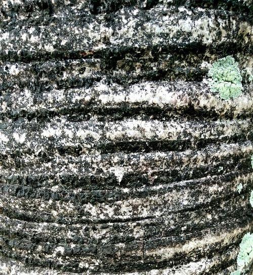 Texture Coconut