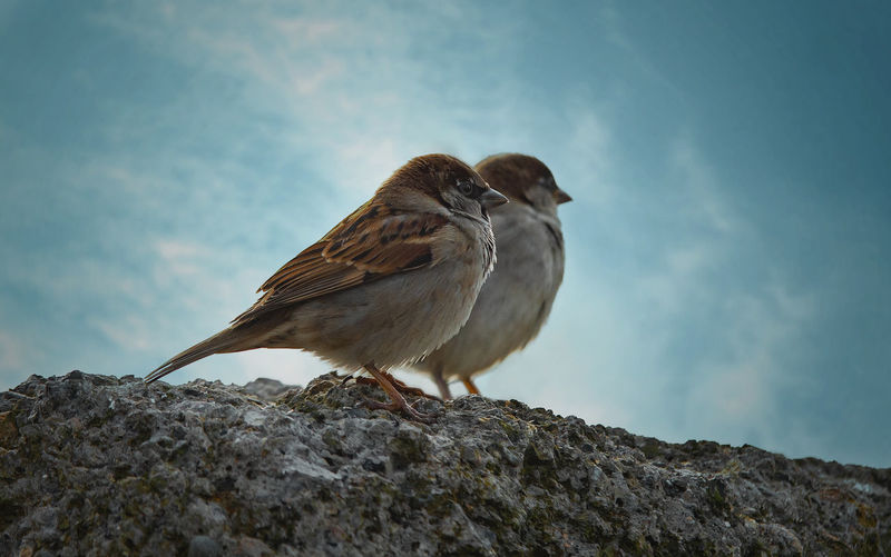 Birds Animals In The Wild Animal Wildlife Animal Themes Bird Animal Vertebrate One Animal Solid Rock Perching Rock - Object Day Sparrow Nature Sky No People Outdoors Low Angle View Focus On Foreground Full Length