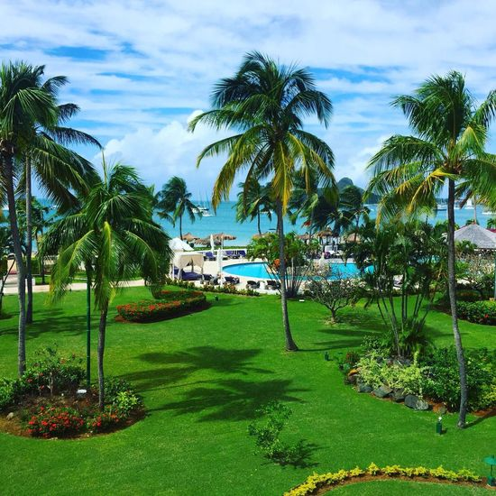 Palm Tree Tree Grass Green Color Nature Sky Golf Course Tourist Resort Growth Golf Outdoors Day Swimming Pool No People Green - Golf Course Beauty In Nature Water