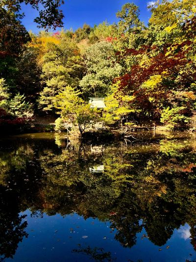 Autumnal Hues: The Entity and the Reflection. (181110-181205) Plant Tree Water Nature Sky Reflection No People Beauty In Nature Scenics - Nature Non-urban Scene Sunlight Growth Idyllic Tranquility Tranquil Scene Day Outdoors