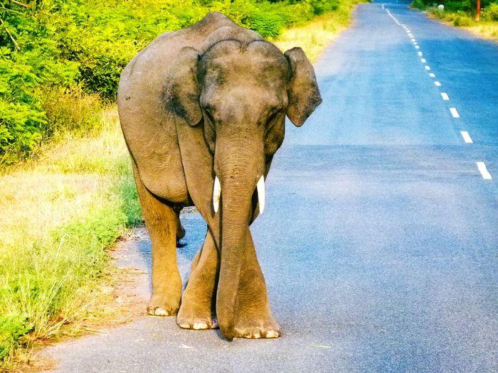Elephant pose.... Jim Corbett National Park..