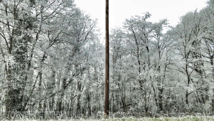 Tree Nature No People Day Outdoors Growth One Beautifulview White White Color Beautiful Winter Canon Canonphotography Auvergne Allier Beauty In Nature Nature Canonpowershot Cold Temperature Tranquility Tree Weather Freshness Snow
