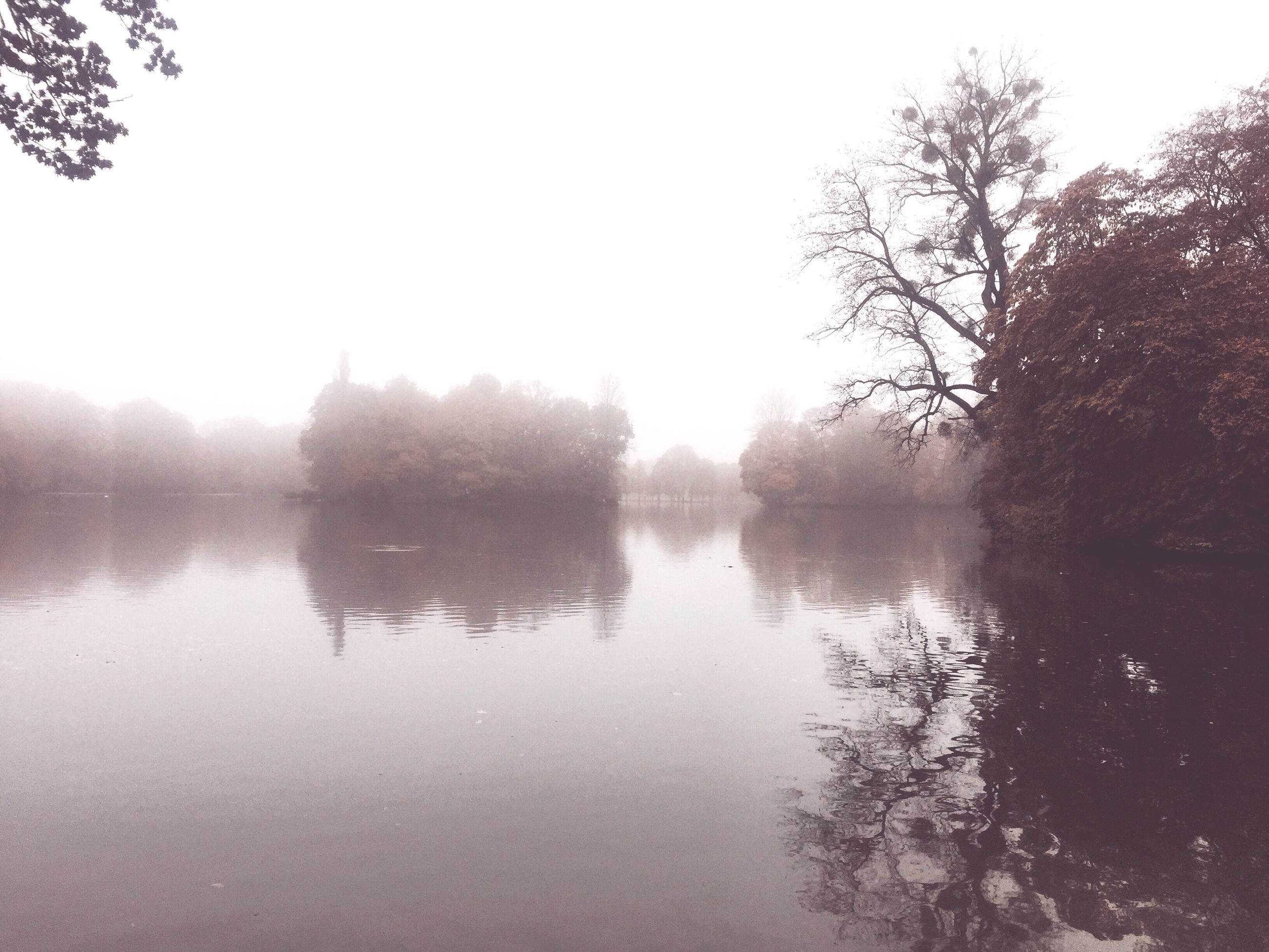 reflection, nature, tree, water, lake, outdoors, sky, tranquility, tranquil scene, scenics, idyllic, no people, beauty in nature, day, animal themes, fog, animals in the wild