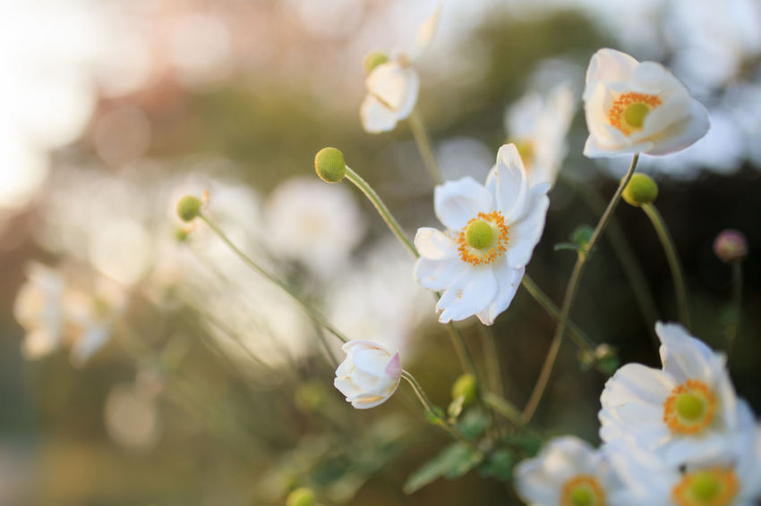 Almond Tree Beauty In Nature Close-up Day Flower Flower Head Fragility Freshness Growth Nature No People Outdoors Plant Tree White Color