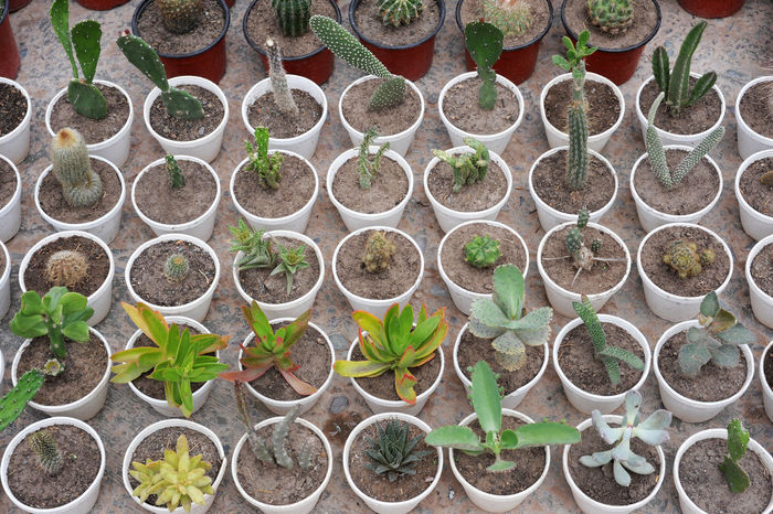 Abundance Argentina Beginnings Choice Close-up Day Fragility Freshness Green Color Greenhouse Growing Growth In A Row Jujuy Leaf Nature New Life No People Outdoors Plant Plant Nursery Potted Plant Sapling Tilcara Variation