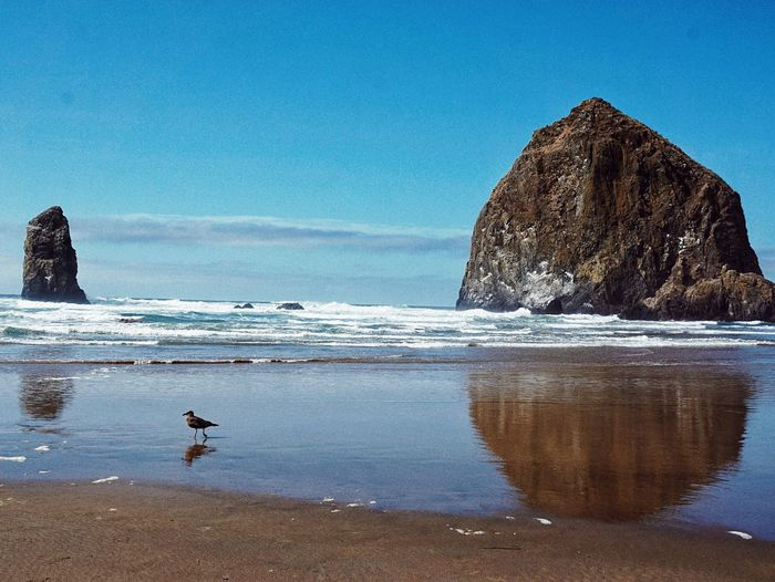 Sea Beach Water Shore Nature Sand Rock - Object Beauty In Nature Scenics Horizon Over Water Clear Sky Blue Sky Outdoors Day Wave One Person People Cannon Beach Oregonexplored Oregon