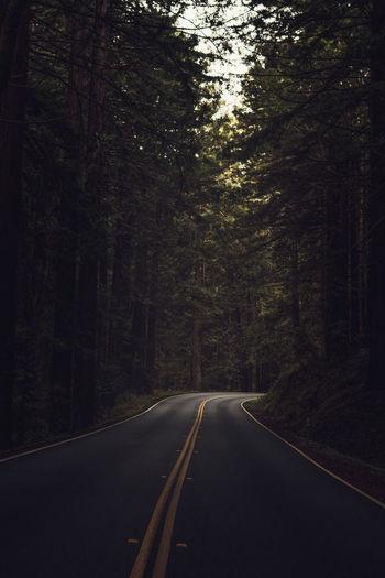 Mood Captures Highway Hwy Moodygrams Navarro River Redwoods State Park Red Woods Forest