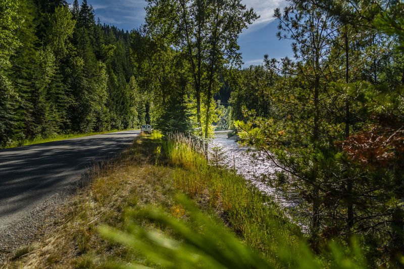 North Fork Coeur d'Alene River Coeur D'Alene NIKON D5300 River Road A River Runs Through It Beauty In Nature Day Direction Forest Green Color Growth Land Nature No People Non-urban Scene Outdoors Plant Road Scenics - Nature Sky Sunlight Tranquil Scene Tranquility Transportation Tree WoodLand Summer Road Tripping The Traveler - 2018 EyeEm Awards The Great Outdoors - 2018 EyeEm Awards