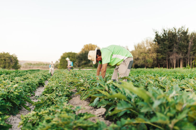 Young man wearing hat working amidst plants in farm