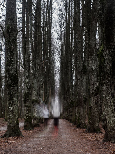 Long Exposure Of Joggers In Forest