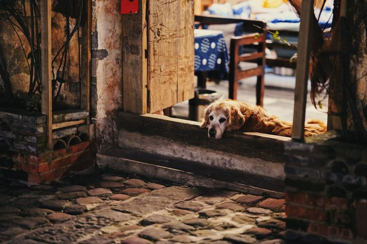 Portrait of dog relaxing on entrance