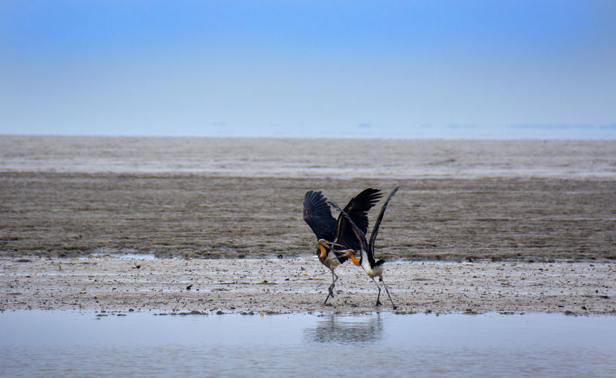 A couple of heron playing at the beach Heron Bird Animal Animal Themes Animal Wildlife Animals In The Wild Beach Beauty In Nature Bird Cold Temperature Day Full Length Heron Land Nature No People One Animal Outdoors Sea Sky Vertebrate Water