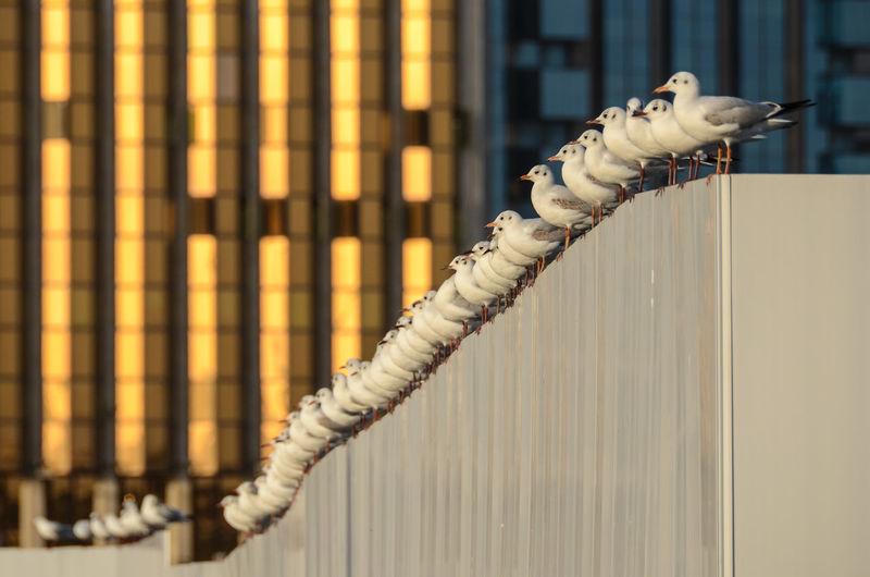 Seagulls perching on wall