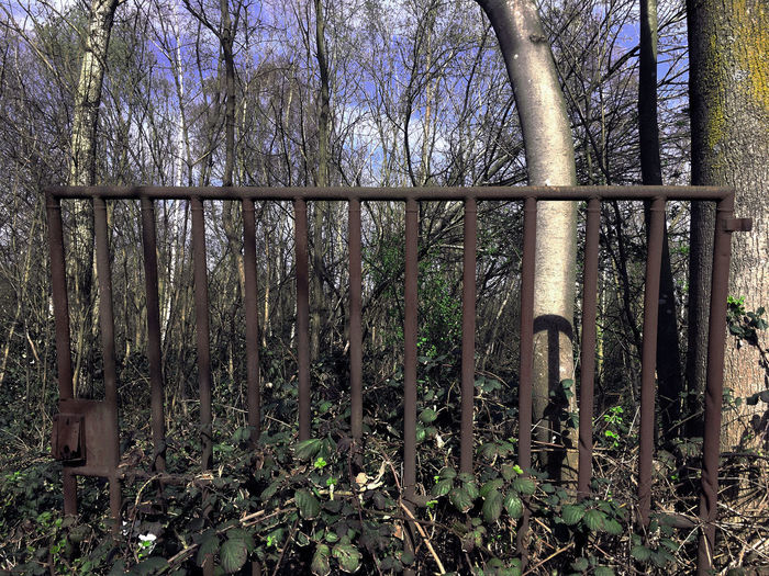 Industrial Rusted Gate Architecture Branch Day Growth Nature No People Outdoors Tree