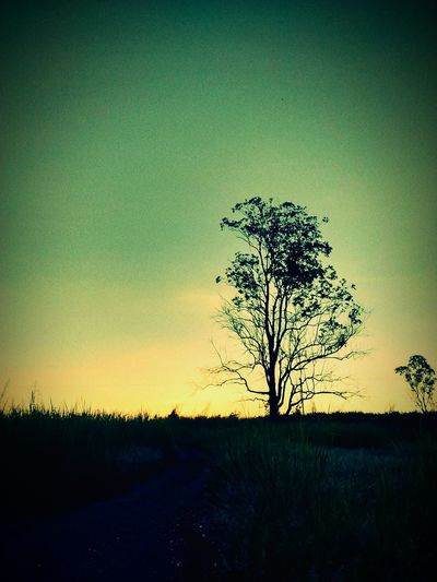 Nature Trhee And Sky