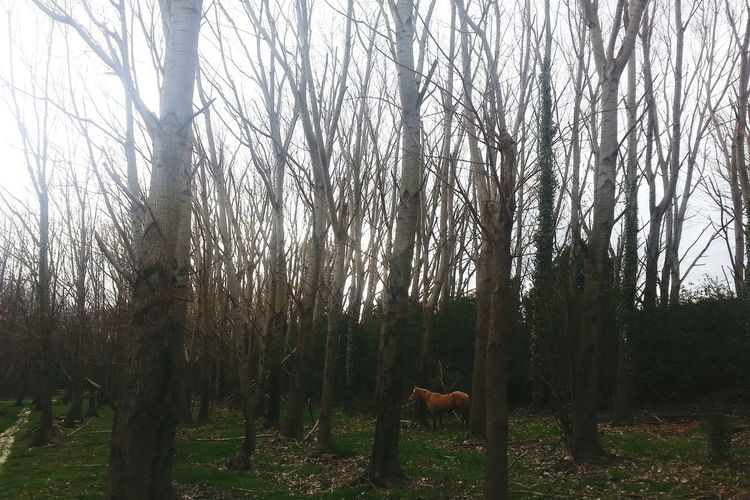 En algun lugar ! Inviernografias Invierno Naturelovers Nature Beautiful ♥ Caballo Bosque Arboles Agosto2015 Relaxing